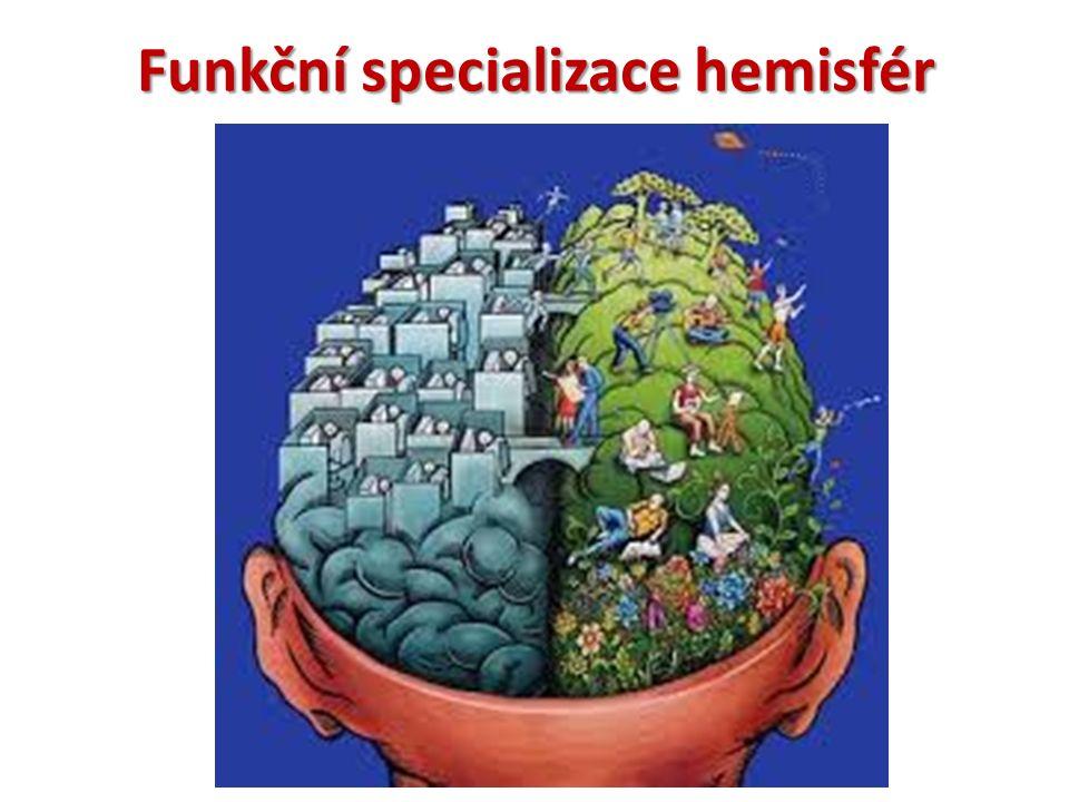 Funkční specializace hemisfér