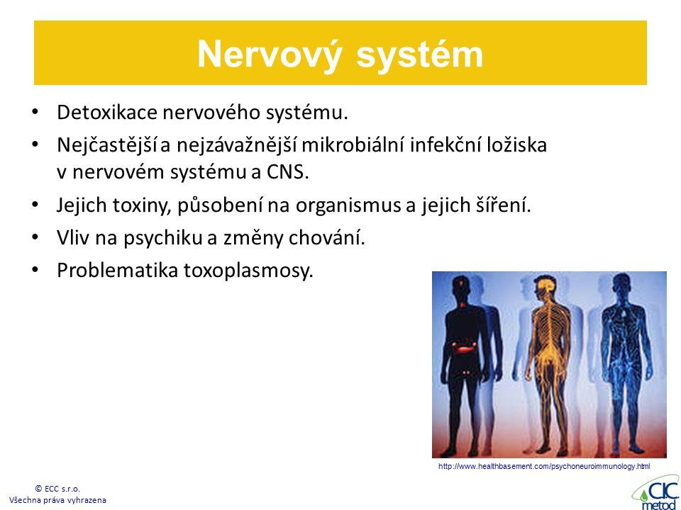 Nervový systém Detoxikace nervového systému.