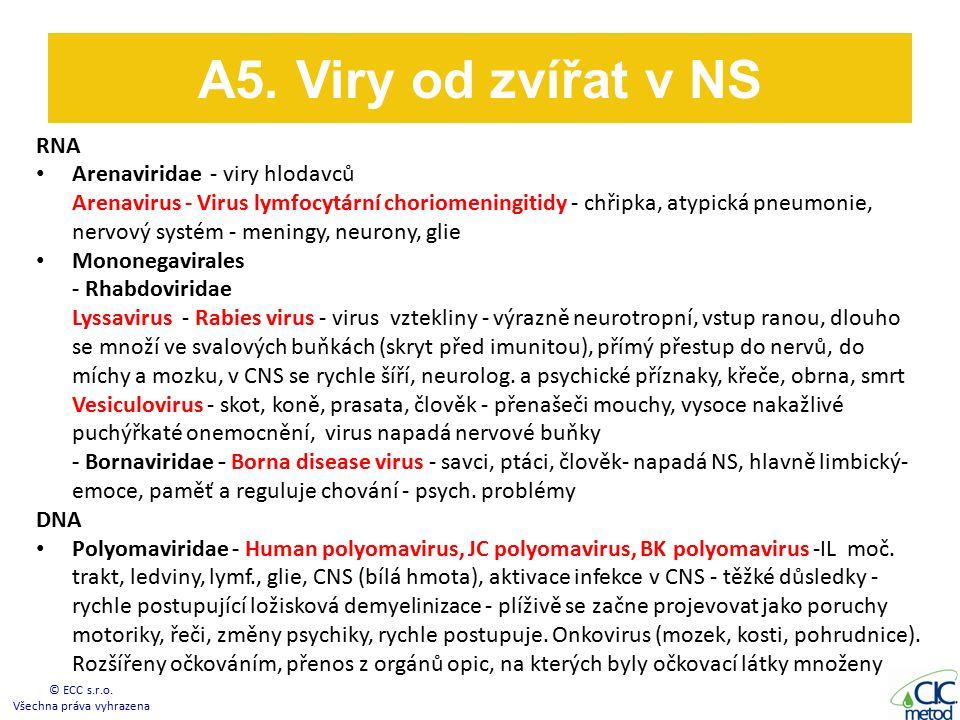 RNA Arenaviridae - viry hlodavců Arenavirus - Virus lymfocytární choriomeningitidy - chřipka, atypická pneumonie, nervový systém - meningy, neurony, glie Mononegavirales - Rhabdoviridae Lyssavirus - Rabies virus - virus vztekliny - výrazně neurotropní, vstup ranou, dlouho se množí ve svalových buňkách (skryt před imunitou), přímý přestup do nervů, do míchy a mozku, v CNS se rychle šíří, neurolog.