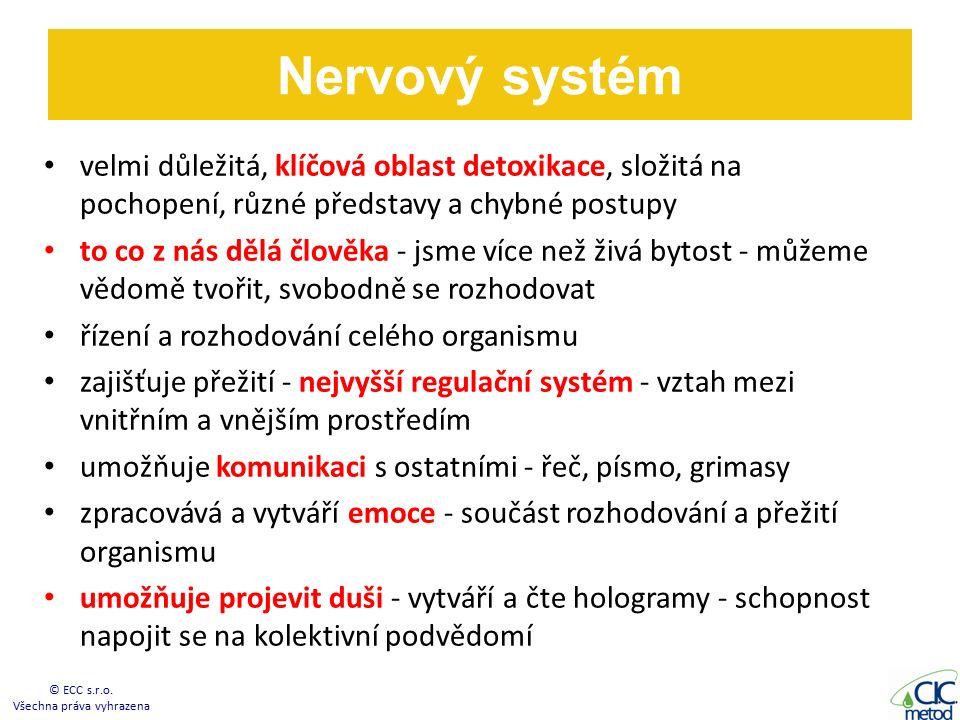 Nervový systém velmi důležitá, klíčová oblast detoxikace, složitá na pochopení, různé představy a chybné postupy to co z nás dělá člověka - jsme více než živá bytost - můžeme vědomě tvořit, svobodně se rozhodovat řízení a rozhodování celého organismu zajišťuje přežití - nejvyšší regulační systém - vztah mezi vnitřním a vnějším prostředím umožňuje komunikaci s ostatními - řeč, písmo, grimasy zpracovává a vytváří emoce - součást rozhodování a přežití organismu umožňuje projevit duši - vytváří a čte hologramy - schopnost napojit se na kolektivní podvědomí © ECC s.r.o.