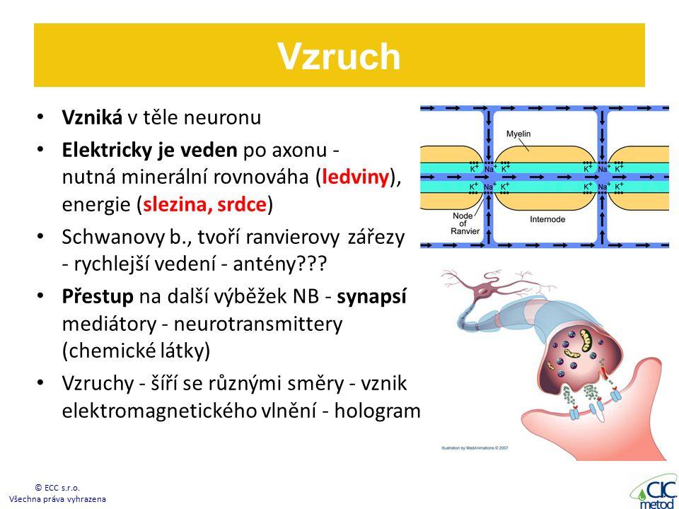 Vzniká v těle neuronu Elektricky je veden po axonu - nutná minerální rovnováha (ledviny), energie (slezina, srdce) Schwanovy b., tvoří ranvierovy zářezy - rychlejší vedení - antény??.