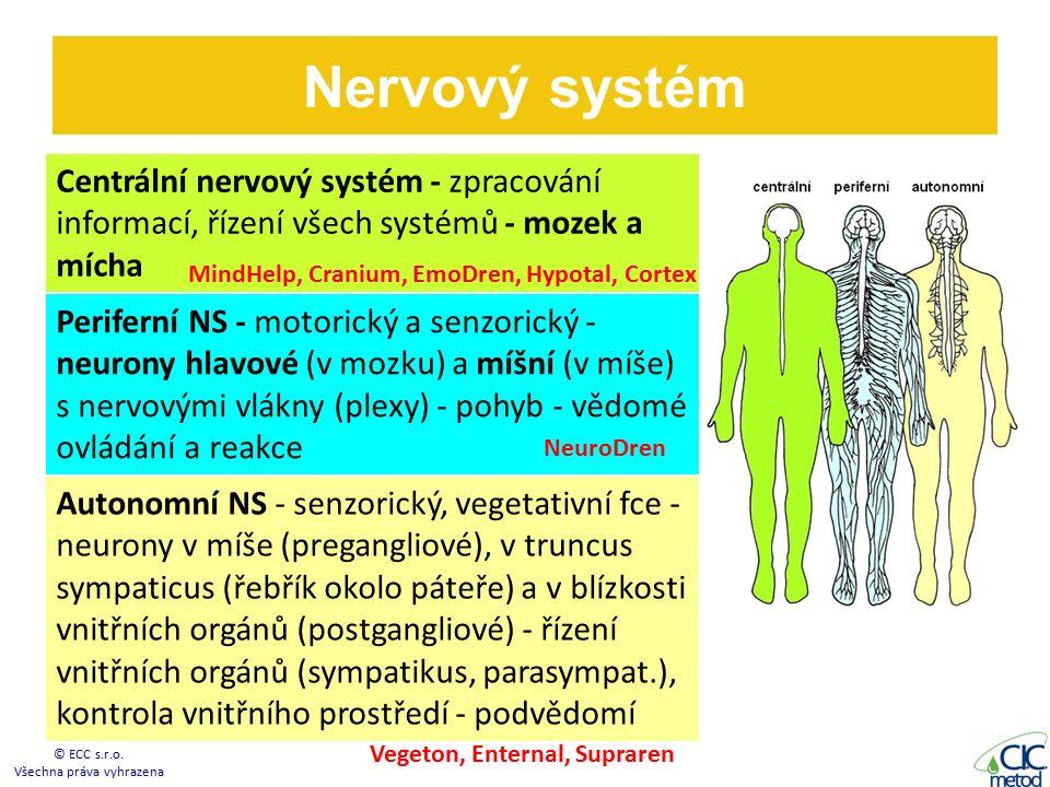 Nervový systém © ECC s.r.o.