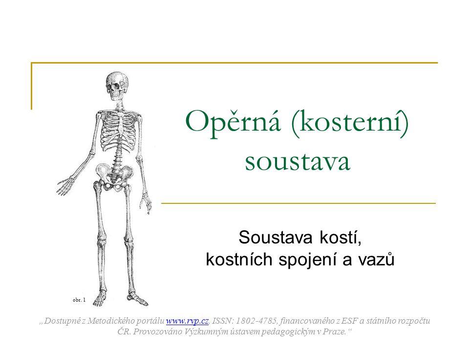 """Opěrná (kosterní) soustava Soustava kostí, kostních spojení a vazů """"Dostupné z Metodického portálu www.rvp.cz, ISSN: 1802-4785, financovaného z ESF a"""