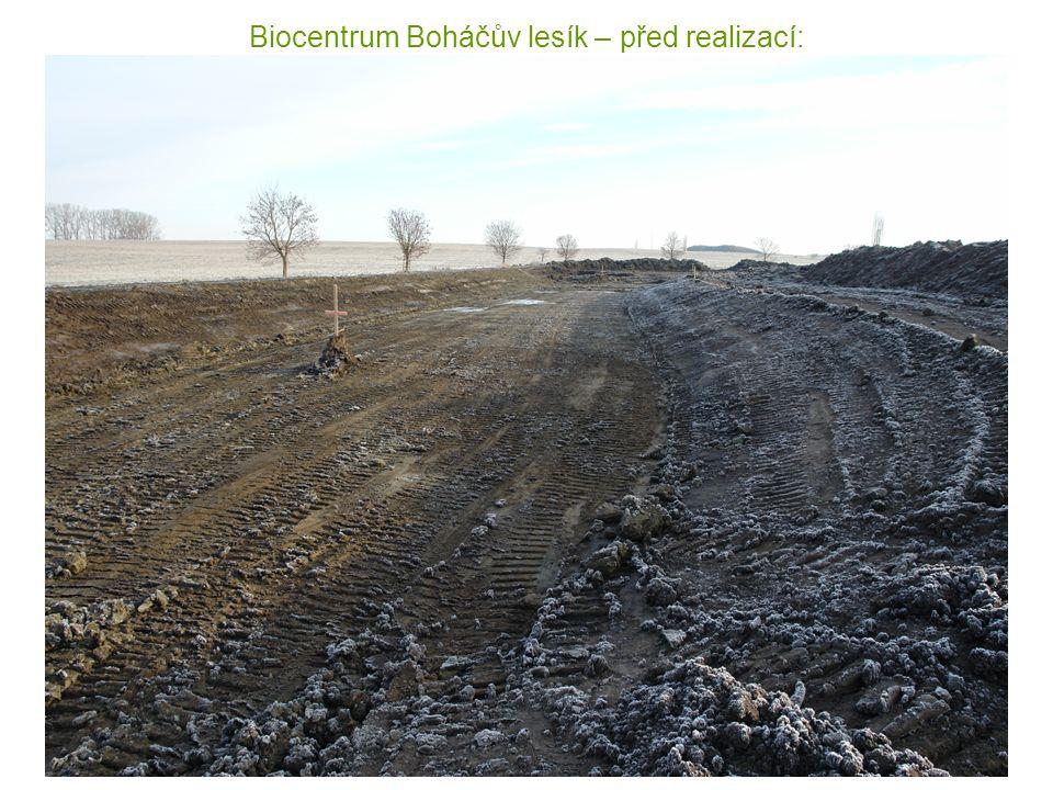 Biocentrum Boháčův lesík – před realizací: