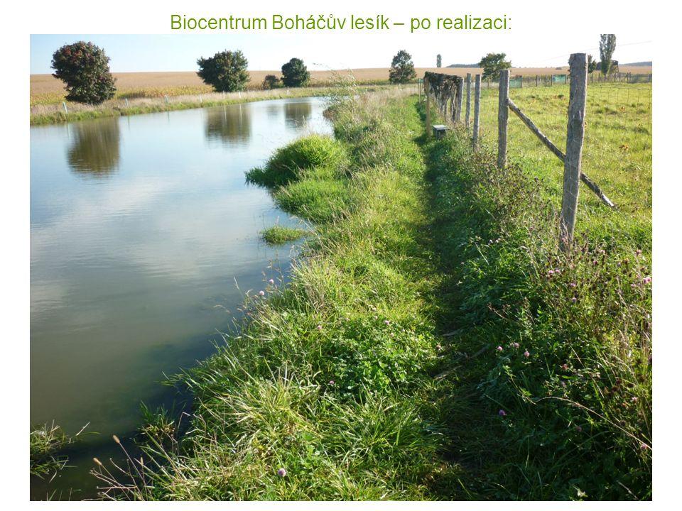 Biocentrum Boháčův lesík – po realizaci: