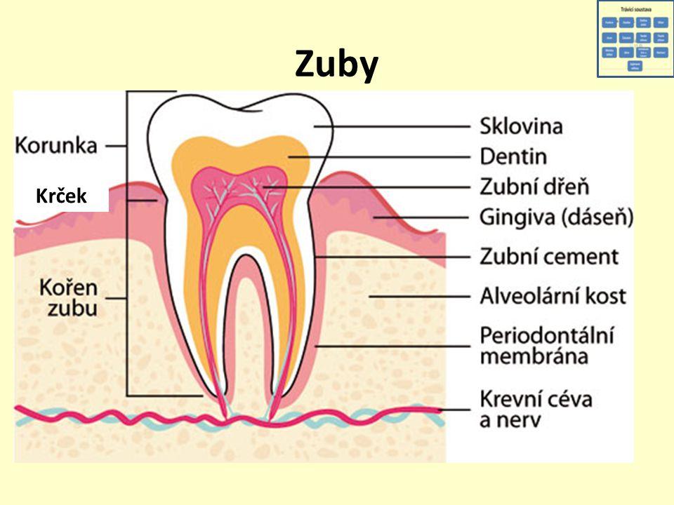 Zuby Krček