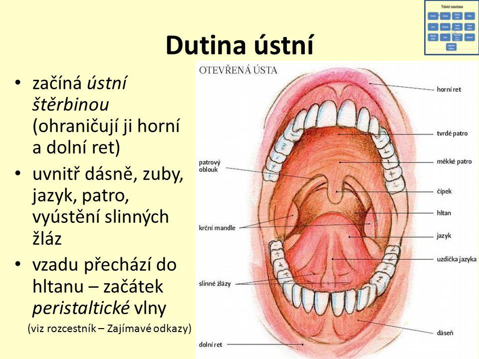 Dutina ústní začíná ústní štěrbinou (ohraničují ji horní a dolní ret) uvnitř dásně, zuby, jazyk, patro, vyústění slinných žláz vzadu přechází do hltanu – začátek peristaltické vlny (viz rozcestník – Zajímavé odkazy)