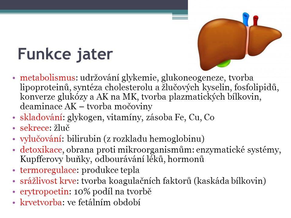 Funkce jater metabolismus: udržování glykemie, glukoneogeneze, tvorba lipoproteinů, syntéza cholesterolu a žlučových kyselin, fosfolipidů, konverze glukózy a AK na MK, tvorba plazmatických bílkovin, deaminace AK – tvorba močoviny skladování: glykogen, vitamíny, zásoba Fe, Cu, Co sekrece: žluč vylučování: bilirubin (z rozkladu hemoglobinu) detoxikace, obrana proti mikroorganismům: enzymatické systémy, Kupfferovy buňky, odbourávání léků, hormonů termoregulace: produkce tepla srážlivost krve: tvorba koagulačních faktorů (kaskáda bílkovin) erytropoetin: 10% podíl na tvorbě krvetvorba: ve fetálním období