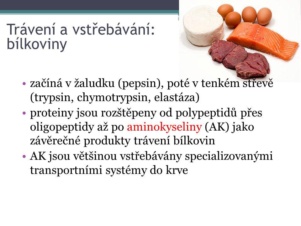 začíná v žaludku (pepsin), poté v tenkém střevě (trypsin, chymotrypsin, elastáza) proteiny jsou rozštěpeny od polypeptidů přes oligopeptidy až po aminokyseliny (AK) jako závěrečné produkty trávení bílkovin AK jsou většinou vstřebávány specializovanými transportními systémy do krve Trávení a vstřebávání: bílkoviny