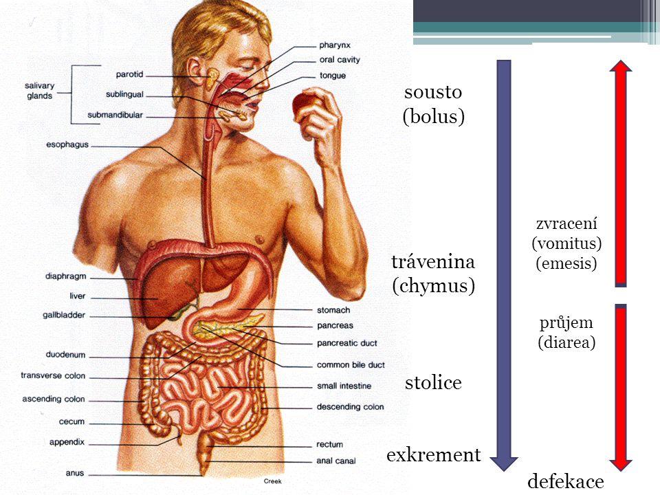 sousto (bolus) trávenina (chymus) stolice exkrement zvracení (vomitus) (emesis) průjem (diarea) defekace