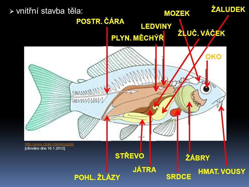 http://www.chytej.cz/files/inpages/012/013-organy-ryby.jpghttp://www.chytej.cz/files/inpages/012/013-organy-ryby.jpg [citováno dne 16.1.2012] http://www.judio.wz.cz/gastronomie/halaszle/zlucnik.jpg http://www.judio.wz.cz/gastronomie/halaszle/zlucnik.jpg [citováno dne 18.1.2012] http://znasryby.ic.cz/soustavy/mechyr.jpghttp://znasryby.ic.cz/soustavy/mechyr.jpg [citováno dne 18.1.2012]