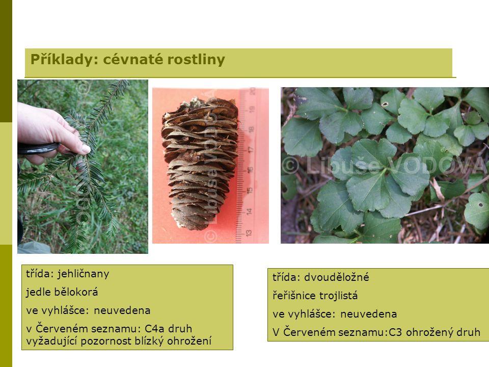 Příklady: cévnaté rostliny třída: jehličnany jedle bělokorá ve vyhlášce: neuvedena v Červeném seznamu: C4a druh vyžadující pozornost blízký ohrožení třída: dvouděložné řeřišnice trojlistá ve vyhlášce: neuvedena V Červeném seznamu:C3 ohrožený druh