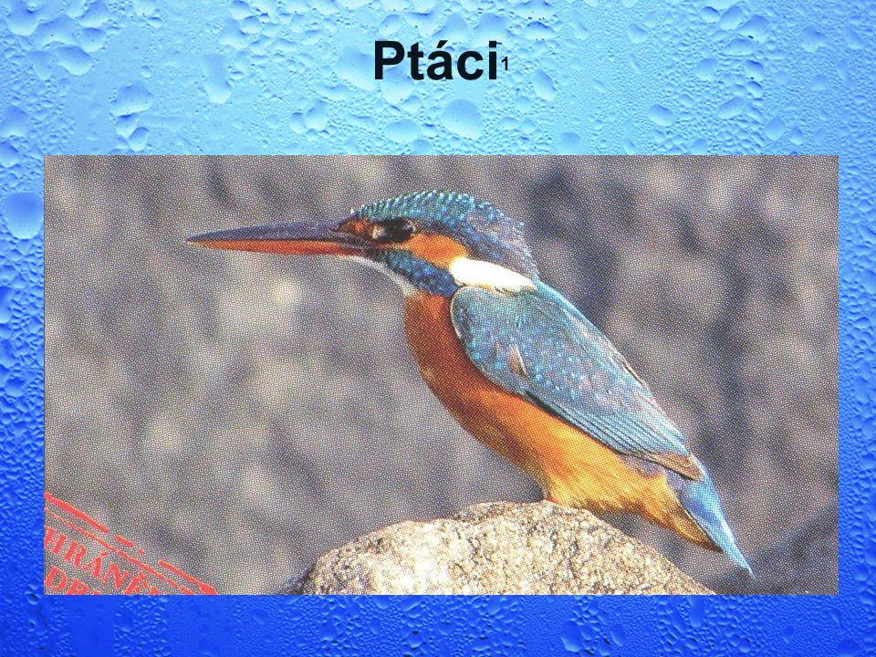 Ptáci 1