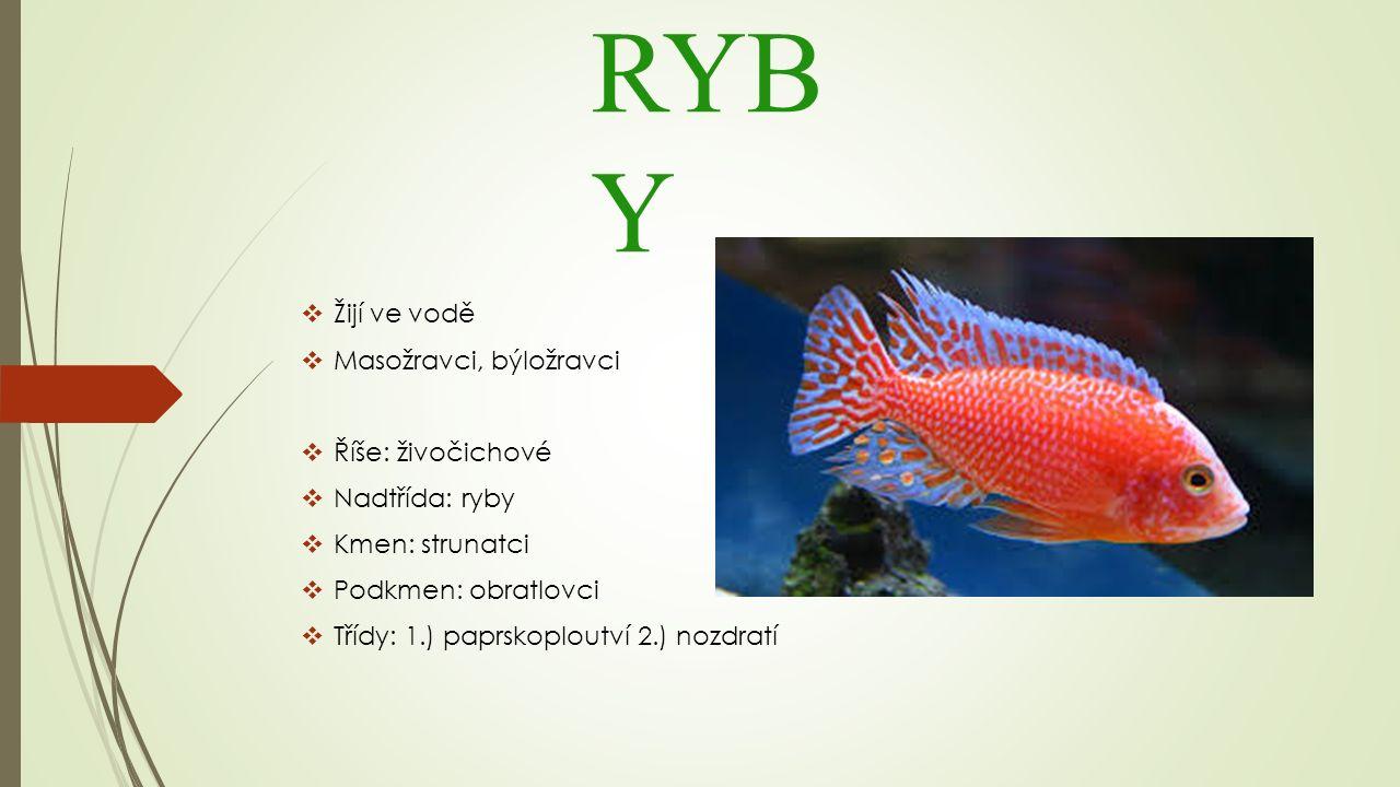 RYB Y  Žijí ve vodě  Masožravci, býložravci  Říše: živočichové  Nadtřída: ryby  Kmen: strunatci  Podkmen: obratlovci  Třídy: 1.) paprskoploutví