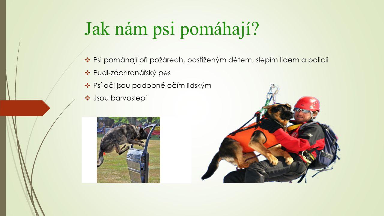 Jak nám psi pomáhají?  Psi pomáhají při požárech, postiženým dětem, slepím lidem a policii  Pudl-záchranářský pes  Psí oči jsou podobné očím lidský