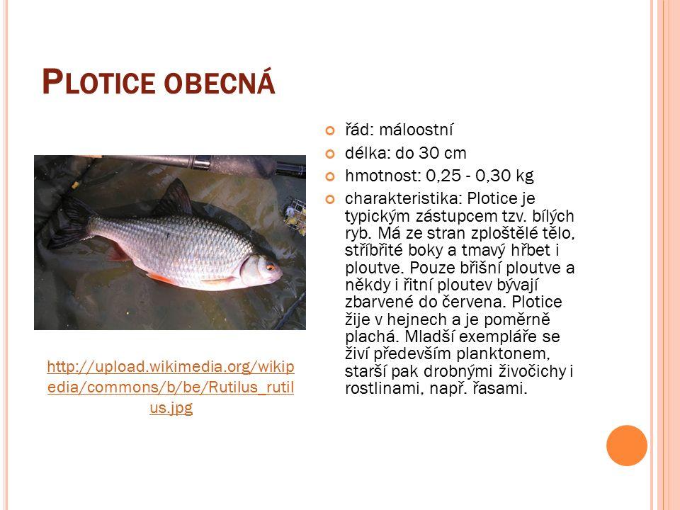 P LOTICE OBECNÁ řád: máloostní délka: do 30 cm hmotnost: 0,25 - 0,30 kg charakteristika: Plotice je typickým zástupcem tzv.