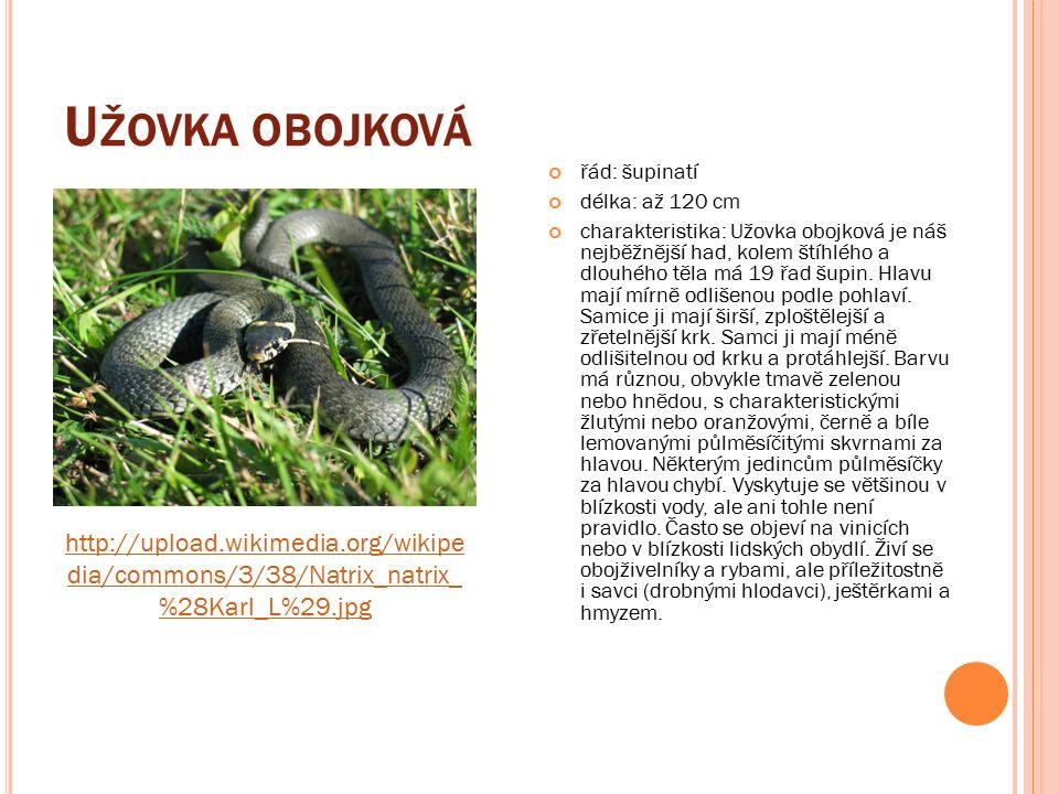 U ŽOVKA OBOJKOVÁ řád: šupinatí délka: až 120 cm charakteristika: Užovka obojková je náš nejběžnější had, kolem štíhlého a dlouhého těla má 19 řad šupin.