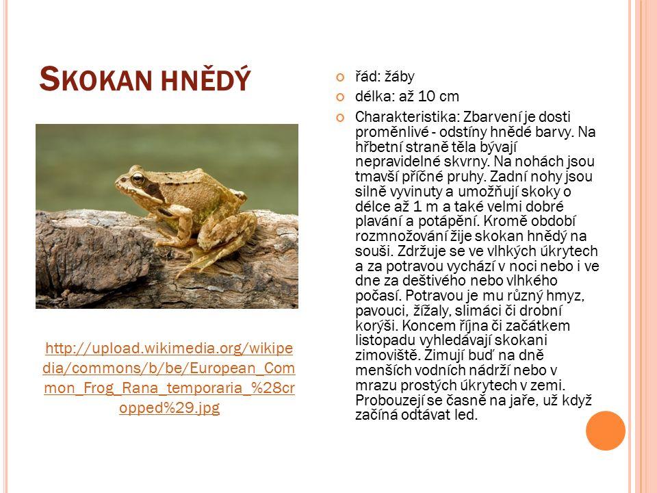 S KOKAN HNĚDÝ řád: žáby délka: až 10 cm Charakteristika: Zbarvení je dosti proměnlivé - odstíny hnědé barvy.
