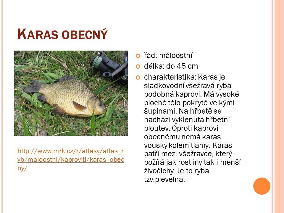 K ARAS OBECNÝ řád: máloostní délka: do 45 cm charakteristika: Karas je sladkovodní všežravá ryba podobná kaprovi.