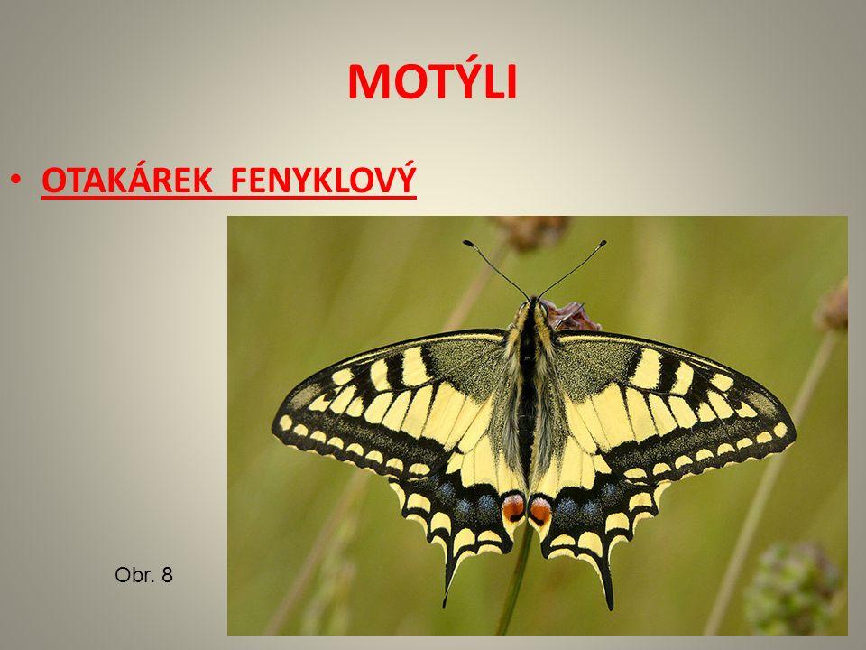 MOTÝLI OTAKÁREK FENYKLOVÝ Obr. 8