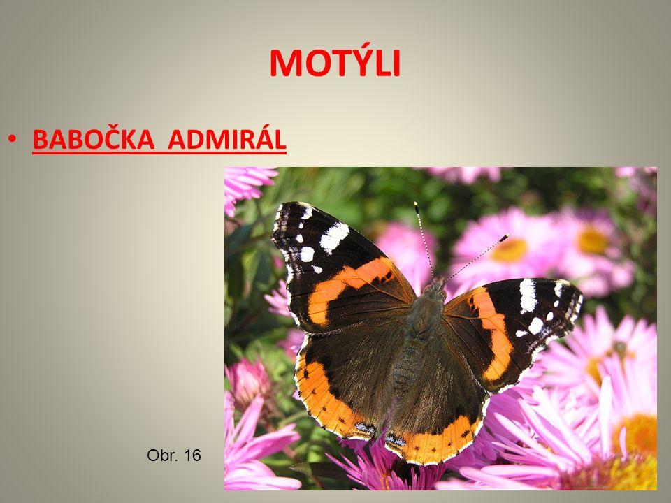 MOTÝLI BABOČKA ADMIRÁL Obr. 16