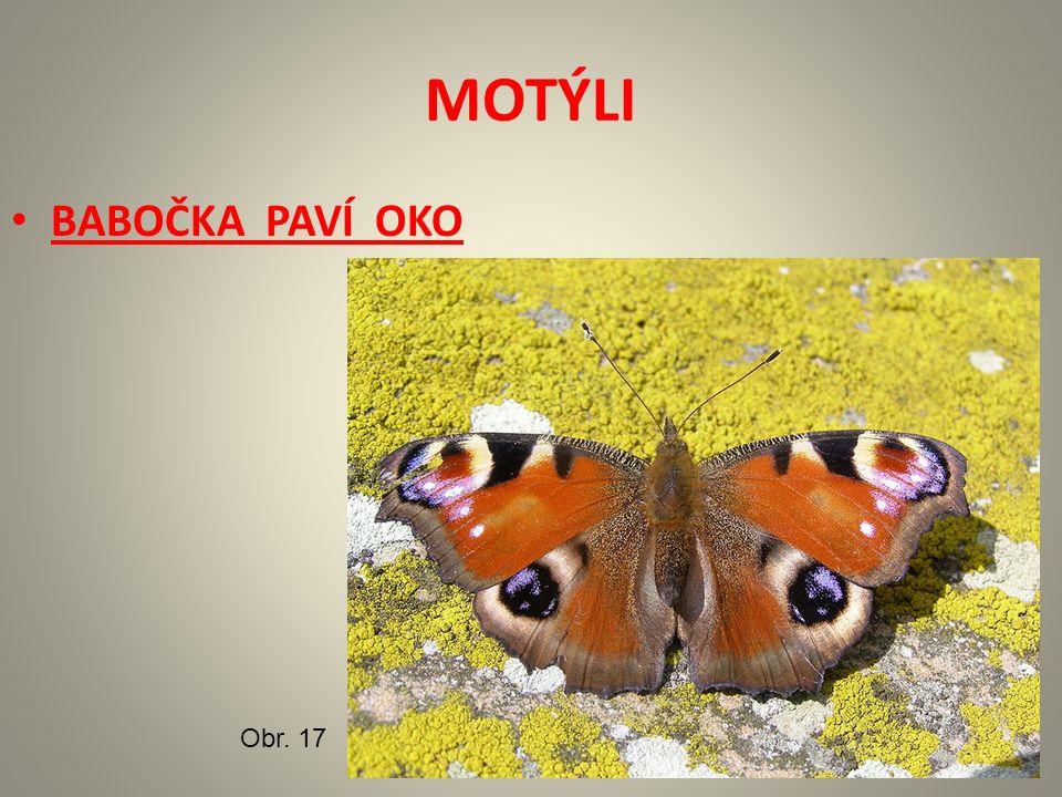 MOTÝLI BABOČKA PAVÍ OKO Obr. 17