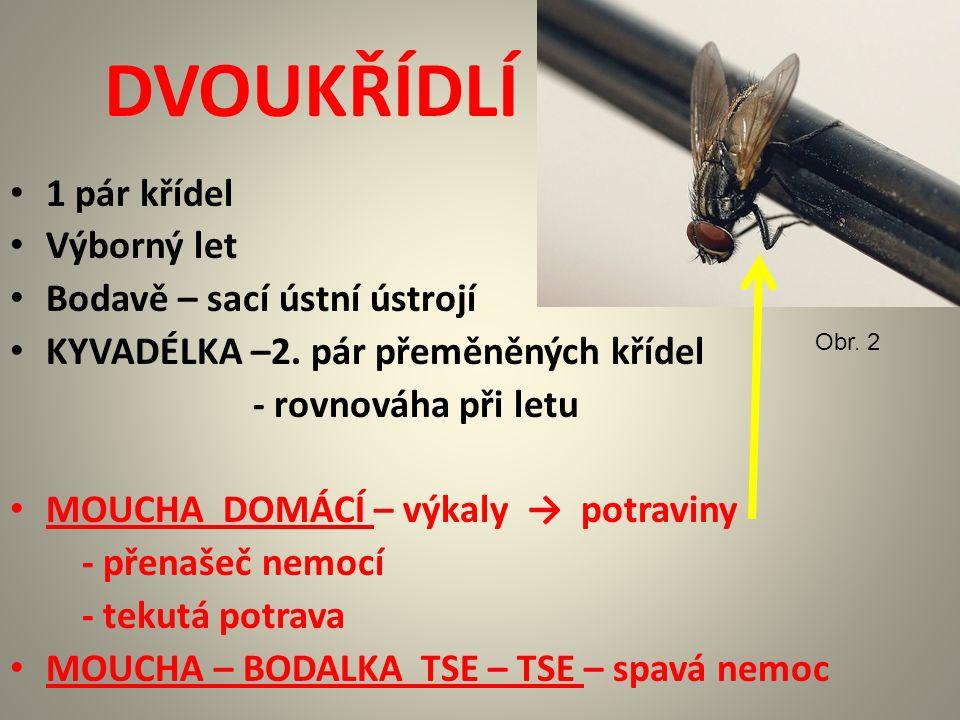 DVOUKŘÍDLÍ 1 pár křídel Výborný let Bodavě – sací ústní ústrojí KYVADÉLKA –2.