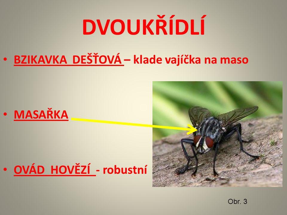 DVOUKŘÍDLÍ OCTOMILKA OBECNÁ – laboratorní hmyz - genetika – jen 4 páry chromozomů - vývoj jen 1 týden - rychlé rozmnožování Obr.