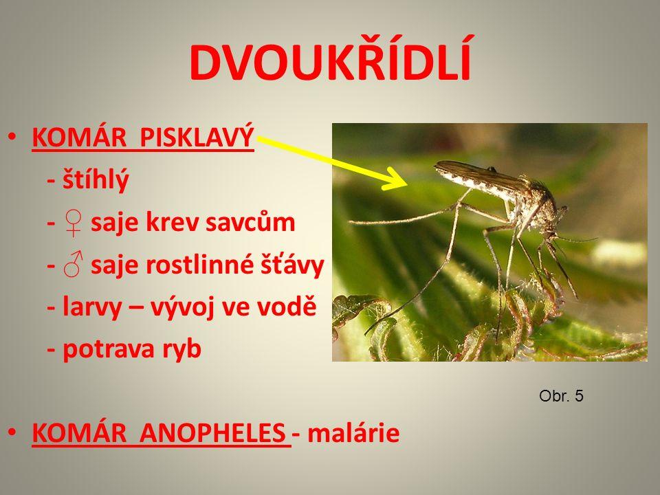MOTÝLI BABOČKA KOPŘIVOVÁ Obr. 15