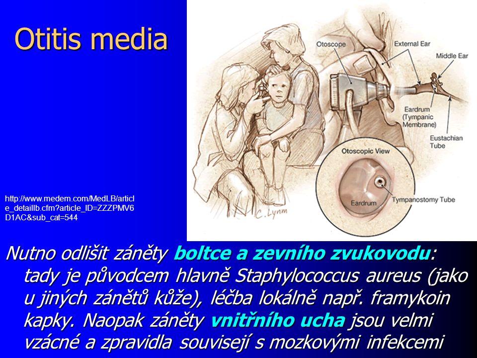 Vznik močových infekcí II Zejména u žen se tedy může uplatnit i špatná intimní hygiena (v dětství důležitá edukace matkou – utírání zepředu dozadu) Zejména u žen se tedy může uplatnit i špatná intimní hygiena (v dětství důležitá edukace matkou – utírání zepředu dozadu) Na druhou stranu, ne každý kmen střevní bakterie je schopen infikovat.
