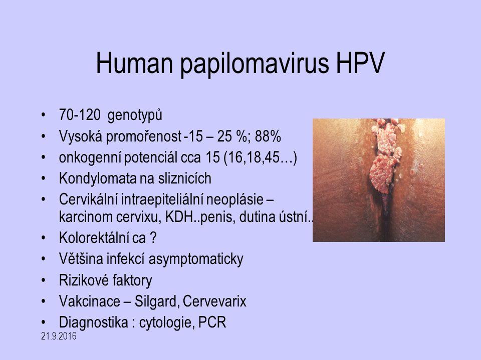 21.9.2016 Human papilomavirus HPV 70-120 genotypů Vysoká promořenost -15 – 25 %; 88% onkogenní potenciál cca 15 (16,18,45…) Kondylomata na sliznicích