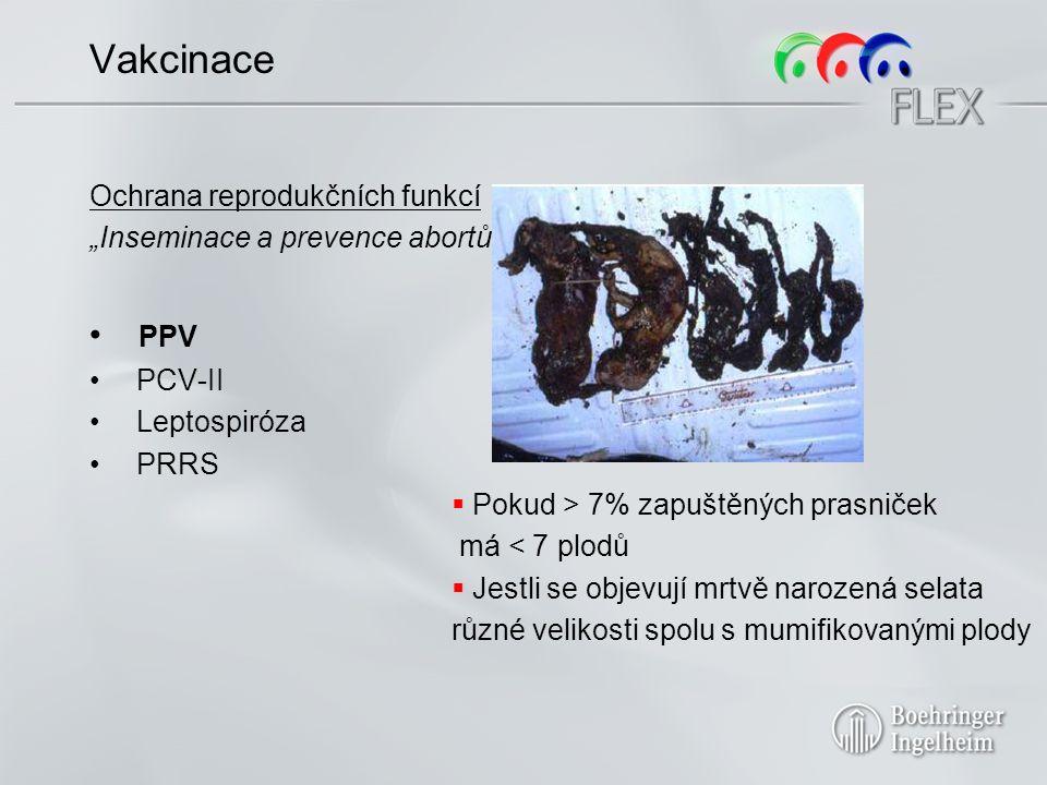 """Vakcinace Ochrana reprodukčních funkcí """"Inseminace a prevence abortů PPV PCV-II Leptospiróza PRRS  Pokud > 7% zapuštěných prasniček má < 7 plodů  Jestli se objevují mrtvě narozená selata různé velikosti spolu s mumifikovanými plody"""