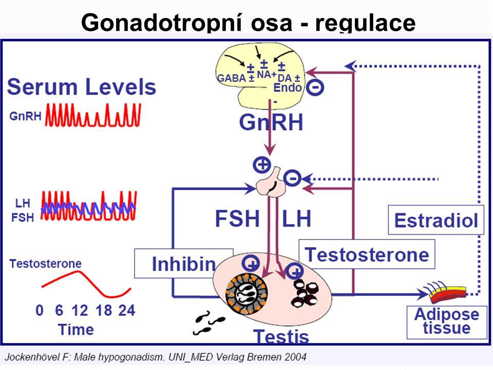 Fyziologické zdroje androgenů Greenspan FS, Gardner DG.