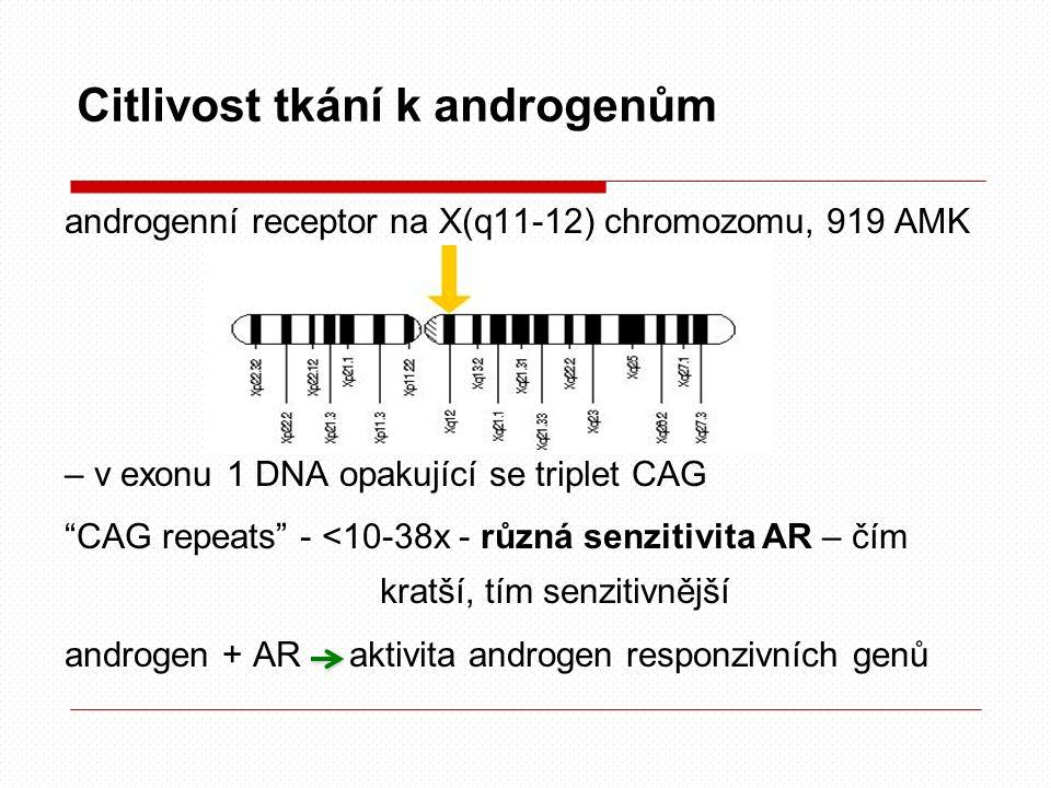 Citlivost tkání k androgenům androgenní receptor na X(q11-12) chromozomu, 919 AMK – v exonu 1 DNA opakující se triplet CAG CAG repeats - <10-38x - různá senzitivita AR – čím kratší, tím senzitivnější androgen + AR aktivita androgen responzivních genů
