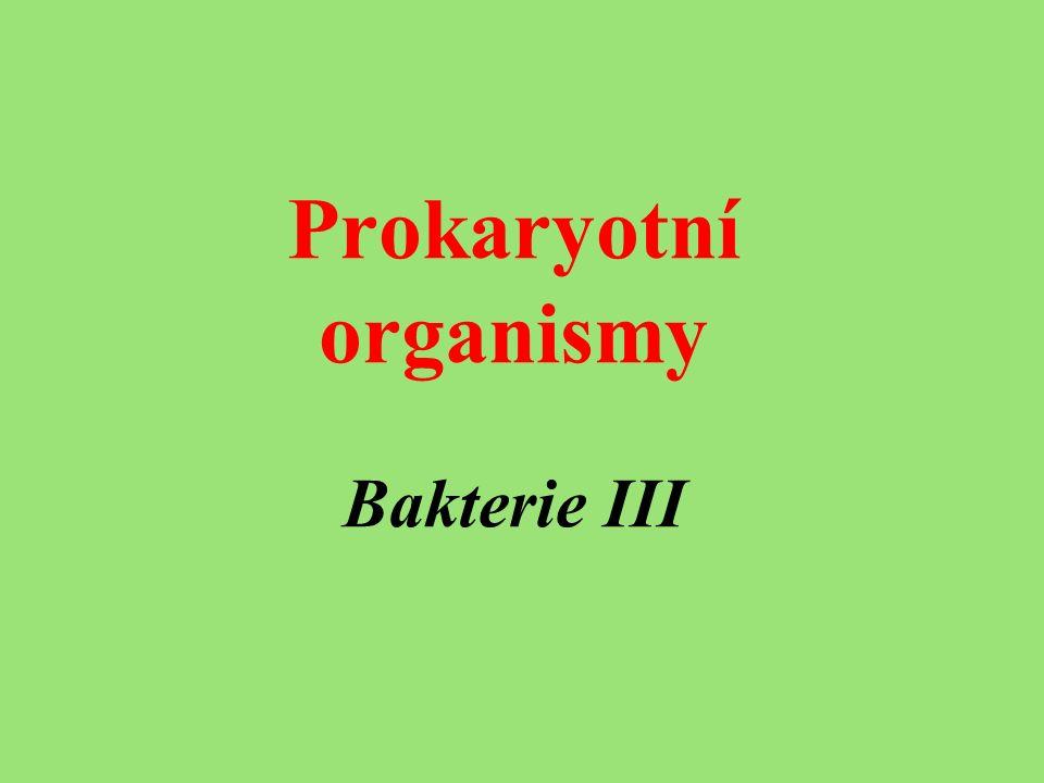 Prokaryotní organismy Bakterie III
