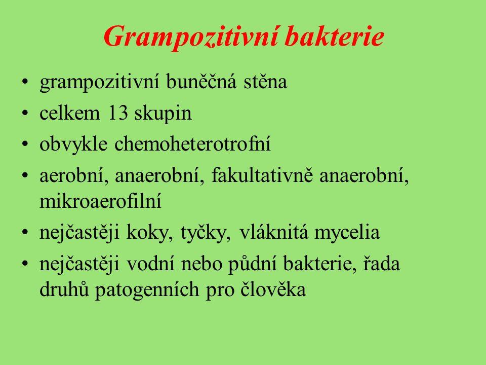 Grampozitivní bakterie grampozitivní buněčná stěna celkem 13 skupin obvykle chemoheterotrofní aerobní, anaerobní, fakultativně anaerobní, mikroaerofilní nejčastěji koky, tyčky, vláknitá mycelia nejčastěji vodní nebo půdní bakterie, řada druhů patogenních pro člověka