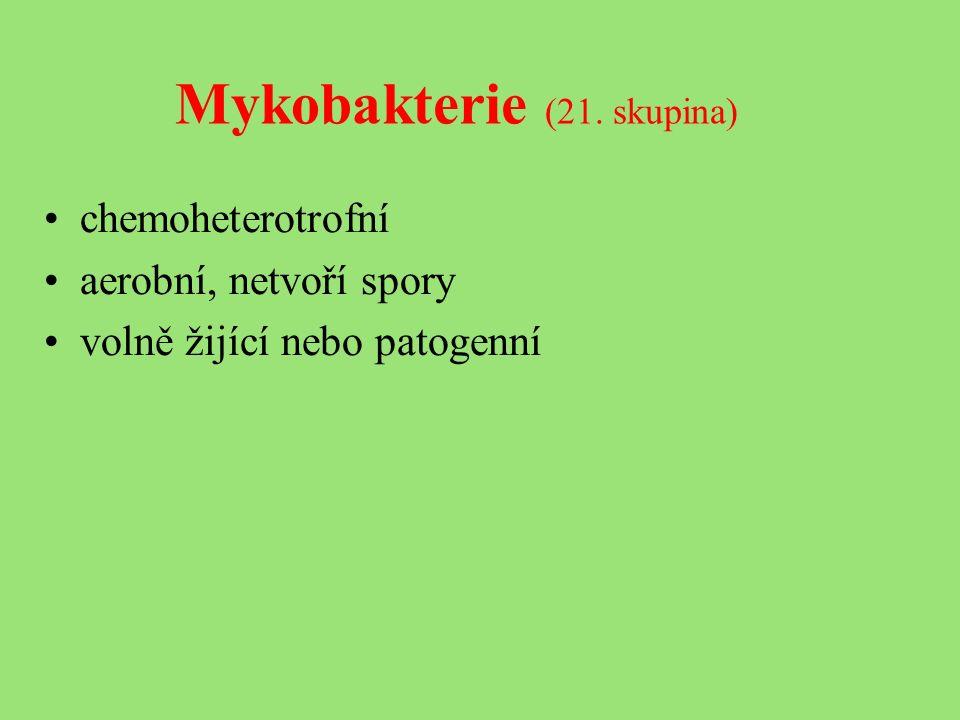 Mykobakterie (21. skupina) chemoheterotrofní aerobní, netvoří spory volně žijící nebo patogenní