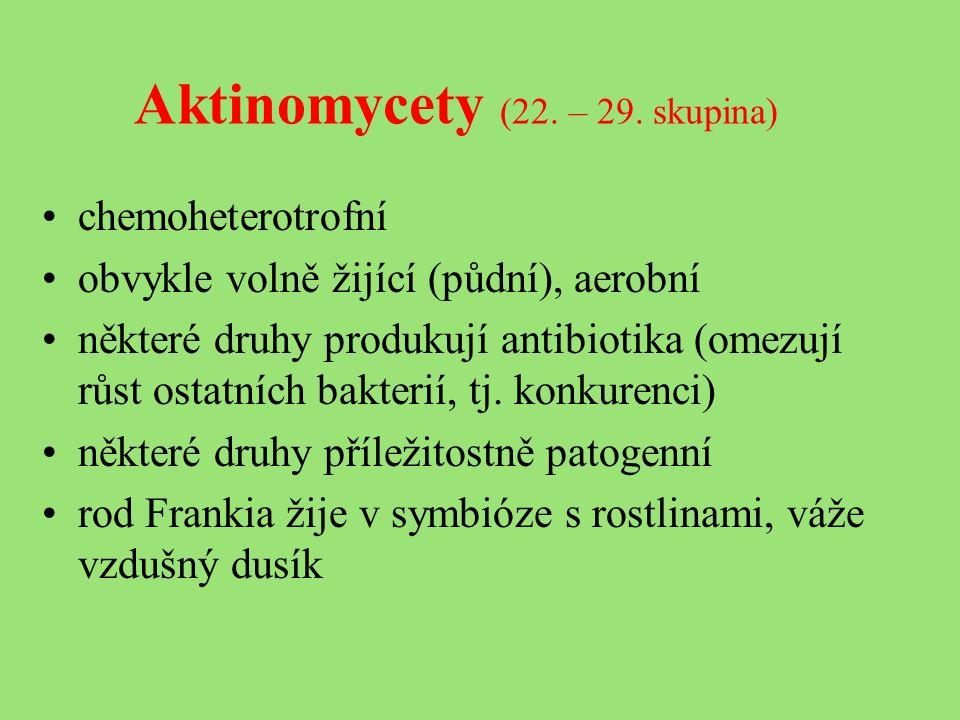 Aktinomycety (22. – 29.