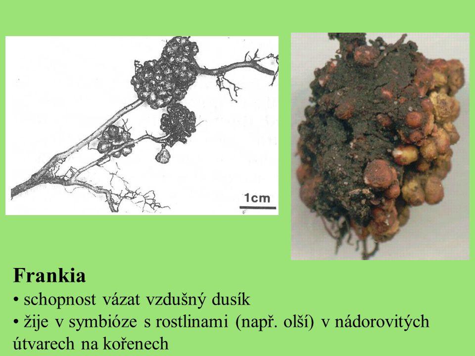 Frankia schopnost vázat vzdušný dusík žije v symbióze s rostlinami (např.