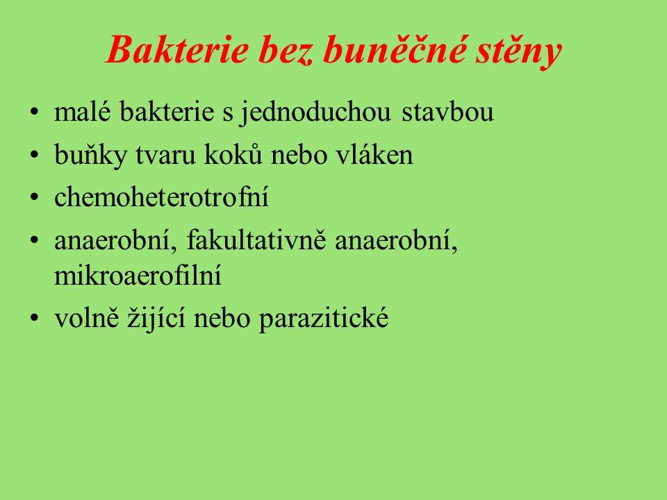 Bakterie bez buněčné stěny malé bakterie s jednoduchou stavbou buňky tvaru koků nebo vláken chemoheterotrofní anaerobní, fakultativně anaerobní, mikroaerofilní volně žijící nebo parazitické