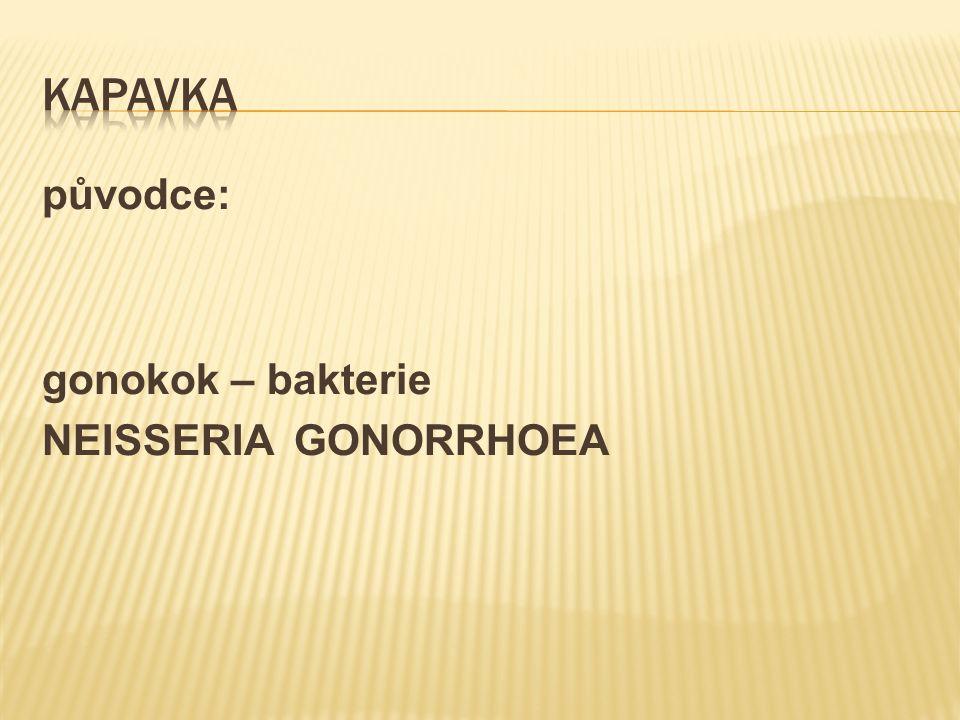 původce: gonokok – bakterie NEISSERIA GONORRHOEA