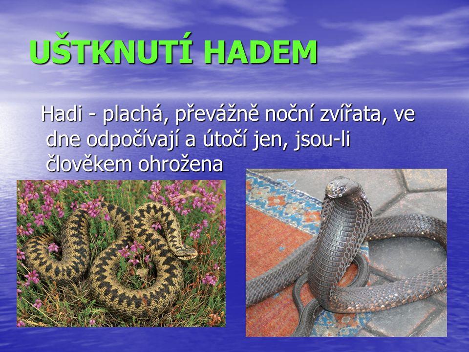 UŠTKNUTÍ HADEM Hadi - plachá, převážně noční zvířata, ve dne odpočívají a útočí jen, jsou-li člověkem ohrožena Hadi - plachá, převážně noční zvířata, ve dne odpočívají a útočí jen, jsou-li člověkem ohrožena