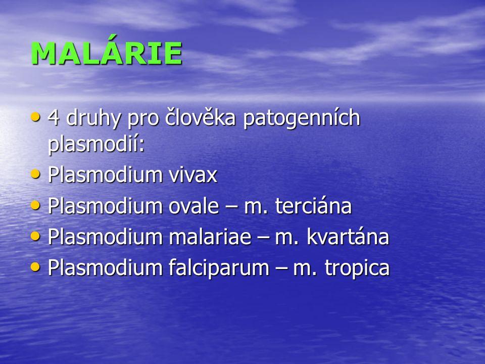 MALÁRIE 4 druhy pro člověka patogenních plasmodií: 4 druhy pro člověka patogenních plasmodií: Plasmodium vivax Plasmodium vivax Plasmodium ovale – m.