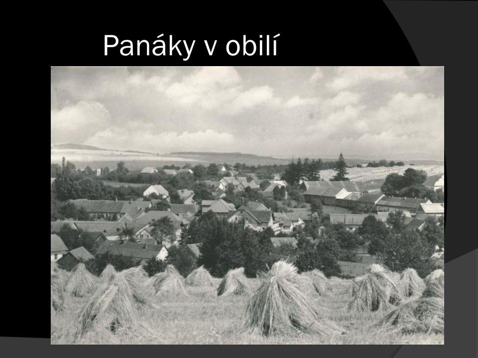 Panáky v obilí
