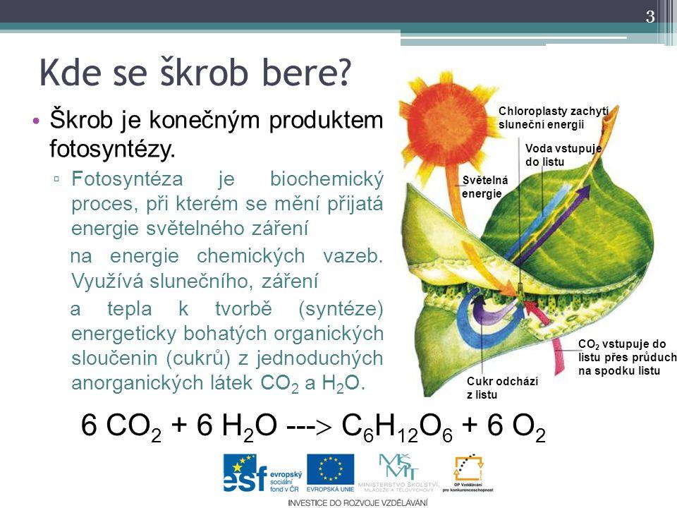 Kde se škrob bere. Škrob je konečným produktem fotosyntézy.