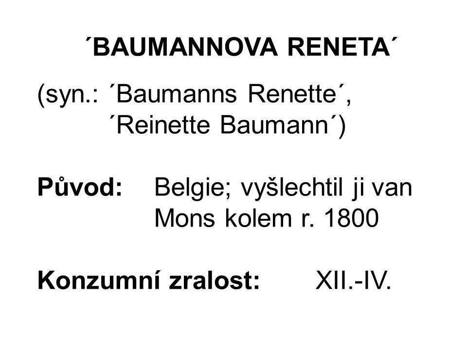 ´BAUMANNOVA RENETA´ (syn.: ´Baumanns Renette´, ´Reinette Baumann´) Původ:Belgie; vyšlechtil ji van Mons kolem r.