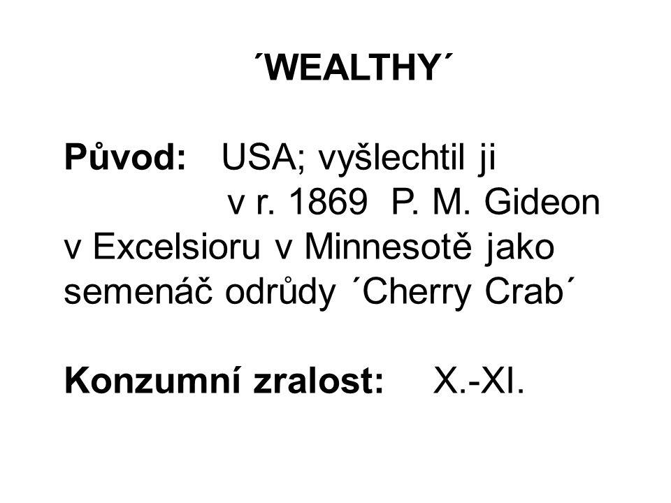 ´WEALTHY´ Původ: USA; vyšlechtil ji v r. 1869 P. M.