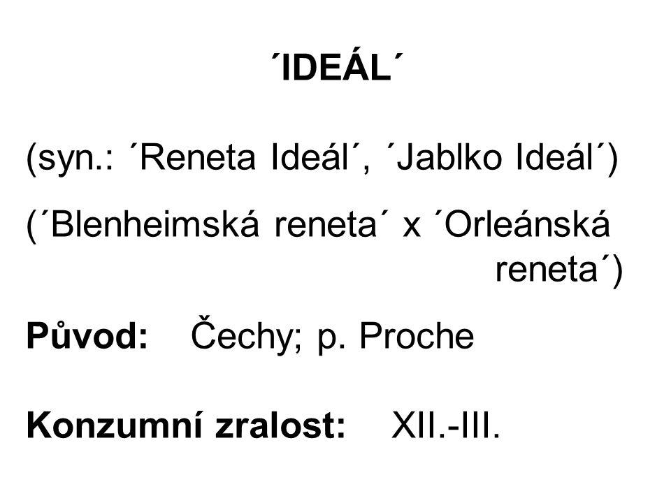 ´IDEÁL´ (syn.: ´Reneta Ideál´, ´Jablko Ideál´) (´Blenheimská reneta´ x ´Orleánská reneta´) Původ: Čechy; p.