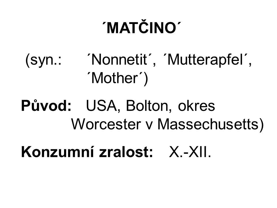´MATČINO´ (syn.:´Nonnetit´, ´Mutterapfel´, ´Mother´) Původ: USA, Bolton, okres Worcester v Massechusetts) Konzumní zralost:X.-XII.