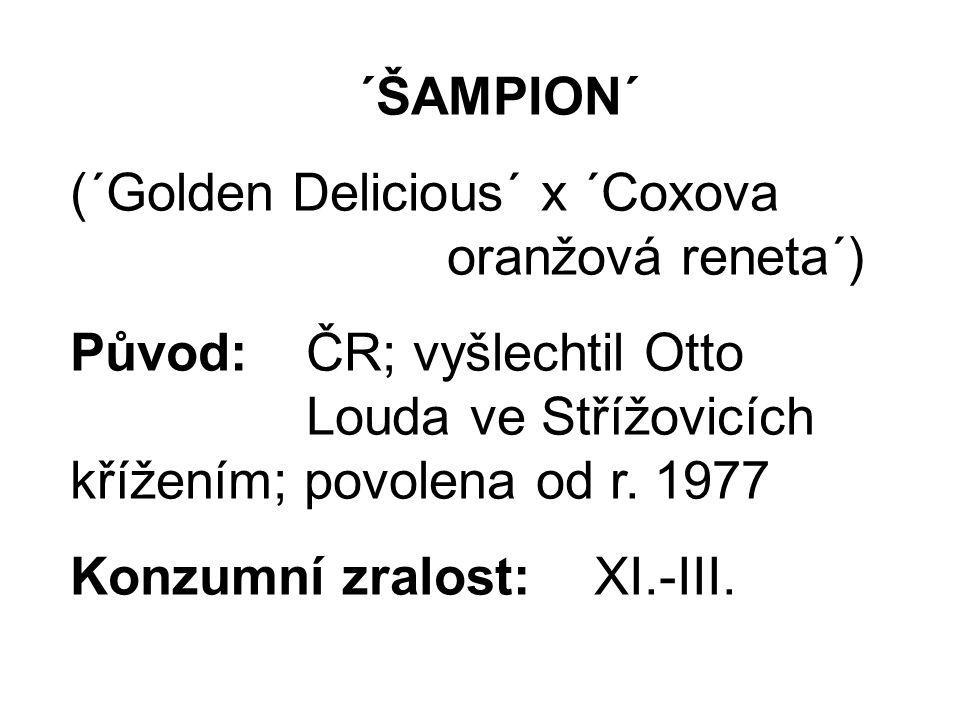 ´ŠAMPION´ (´Golden Delicious´ x ´Coxova oranžová reneta´) Původ: ČR; vyšlechtil Otto Louda ve Střížovicích křížením; povolena od r.